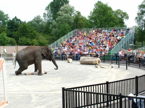 African Lion Safari - Elephant Show Pavillion